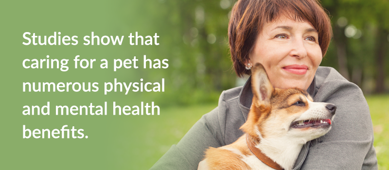 pet-parents-guide-to-caring-for-your-dog-or-cat-1