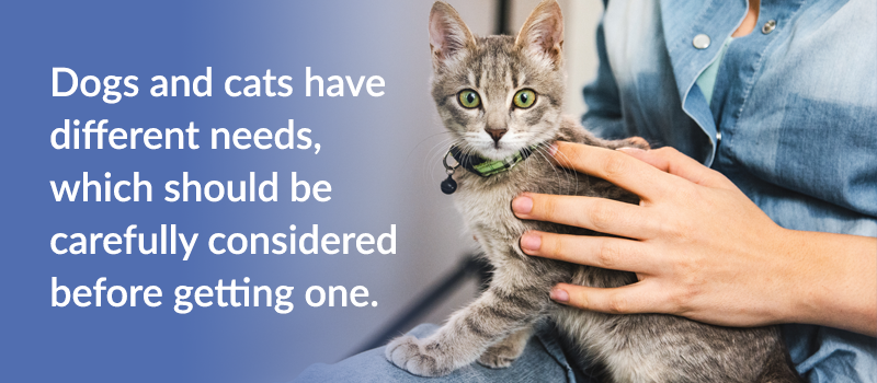 pet-parents-guide-to-caring-for-your-dog-or-cat-2
