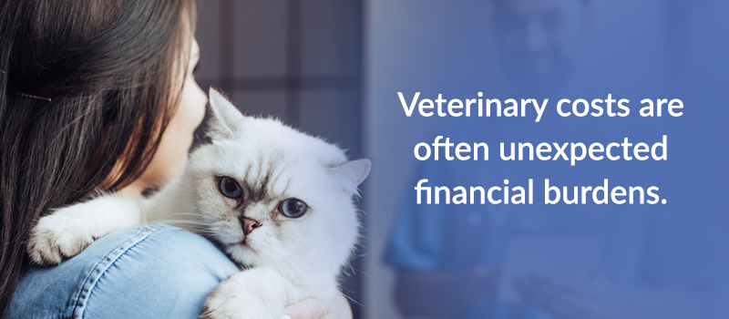 pet-parents-guide-to-caring-for-your-dog-or-cat-5